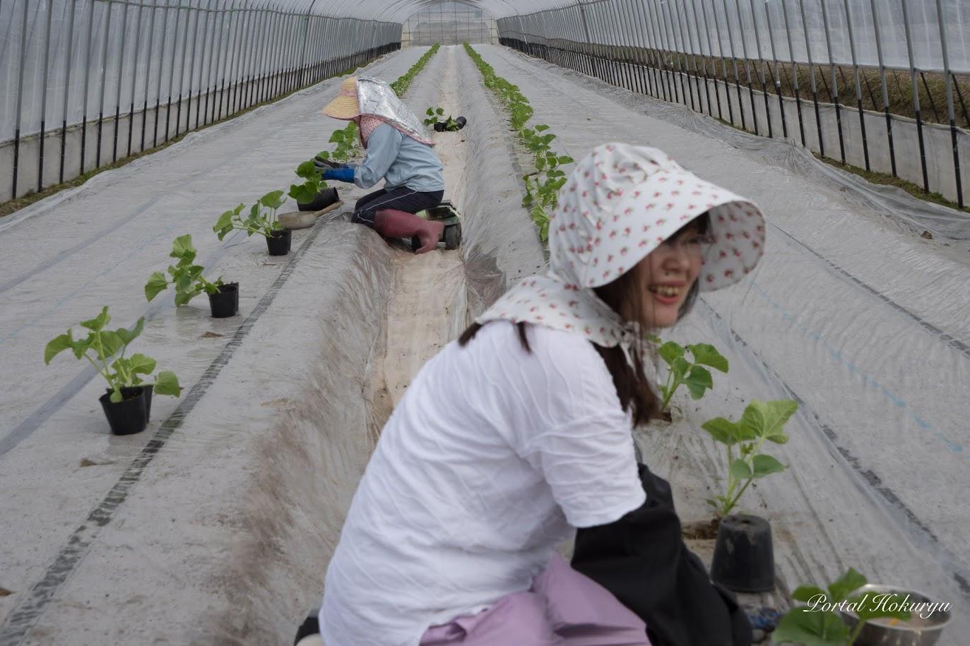 農業体験実習生・佐竹由美さん(右)と渡邊美香さん(右)