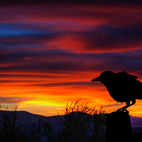 Crow at Sunset by Chip Bolcik - Digital Art Things