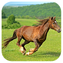 Thoroughbred Horse icon