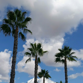 California Blue Sky's by Cathy Peterson - Nature Up Close Trees & Bushes