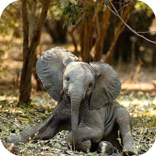 Elephant Wallpaper Apps Bei Google Play