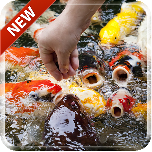 Descargar Koi Free 3d Live Wallpaper 10 Apk Com
