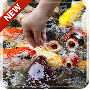 Koi Free 3D Live Wallpaper