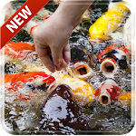 Koi Free 3D Live Wallpaper Icon