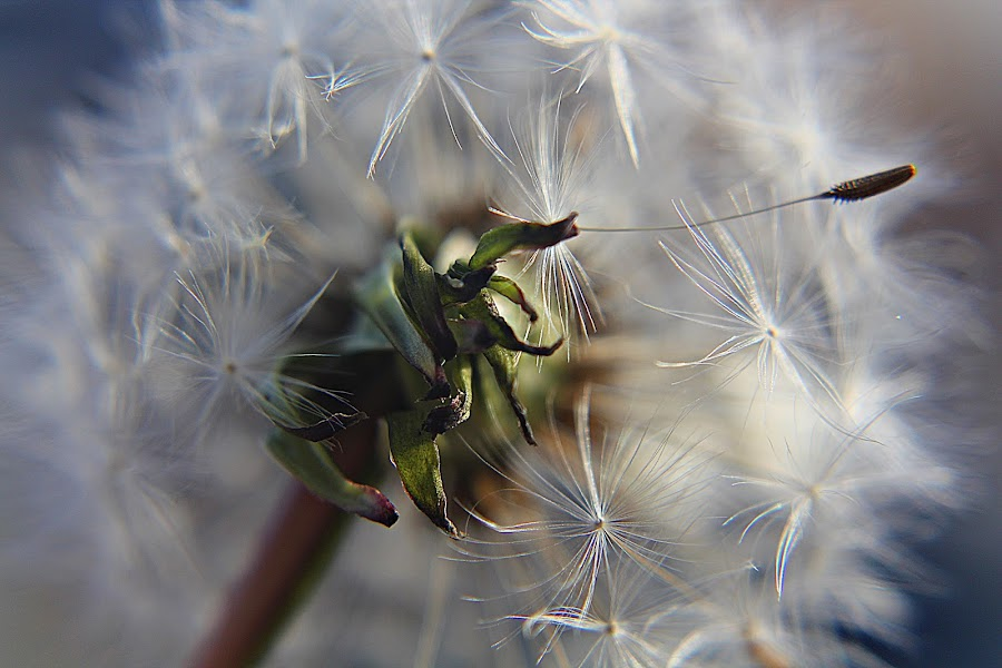 by Inger Lefstad - Nature Up Close Other plants