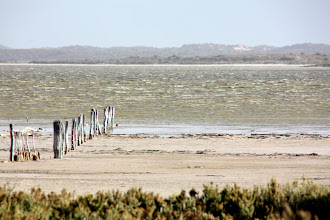 Photo: Year 2 Day 225 - An Area Called The Coorong