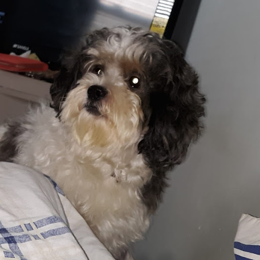 Snoopy, MISSING Sep 21, 2019