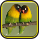 Download Kicau Burung Lovebird For PC Windows and Mac