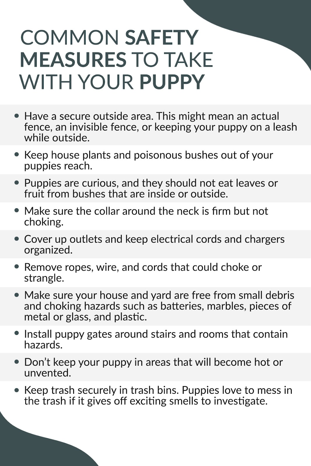common safety measures to take with your dog