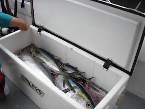 Photo: Yellowfin Tuna Nov 2010