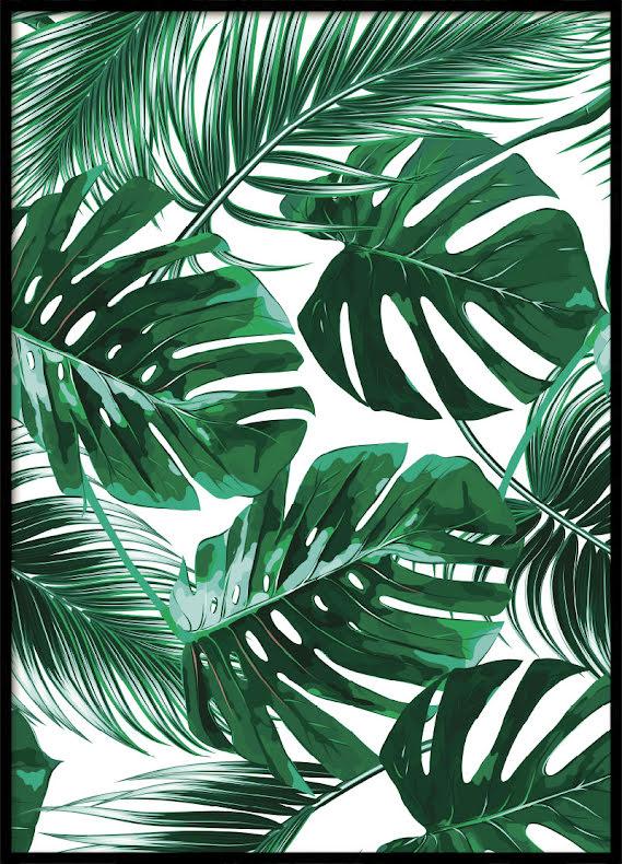 Monstera Leaves, Poster