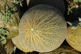 Photo: Melon