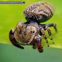 Beige Beetle Jumper