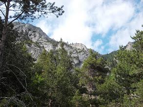 Photo: enfin la Forêt
