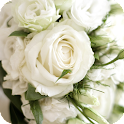 White Rose Live Wallpaper icon