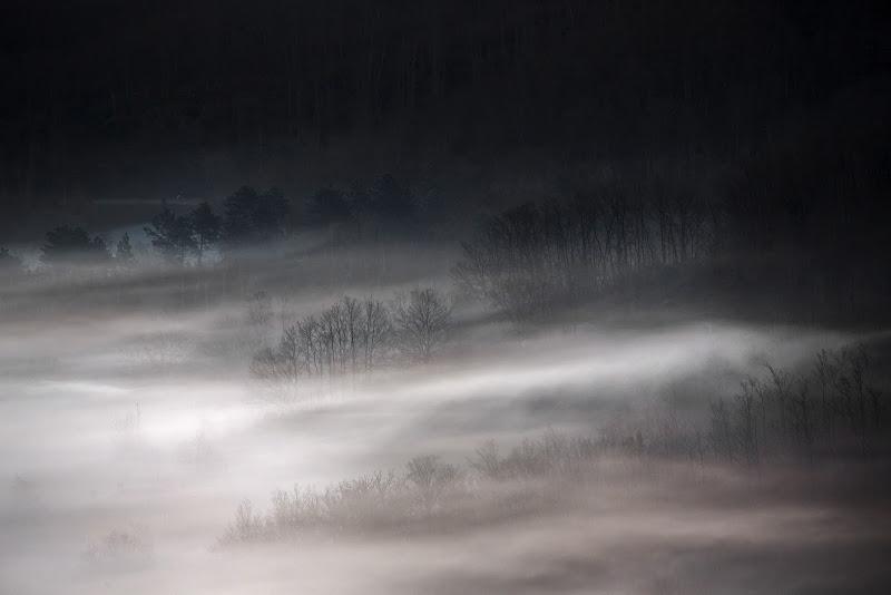 Il bosco nascosto... di stefanogaleotti