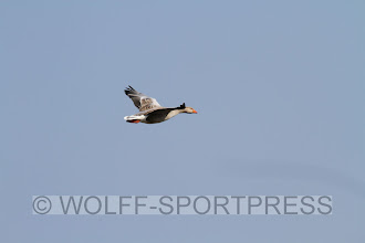Photo: Bild Wolff-Sportpress, Günther Wolff