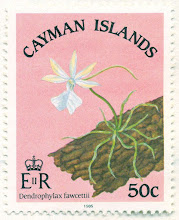 Photo: 1985 Cayman Islands Ghost Orchid - Dendrophylax fawcettii (Critically Endangered Grand Cayman endemic) on 50 cent stamp. Release date: March 13.