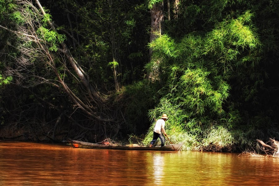 by Tt Sherman - Landscapes Forests