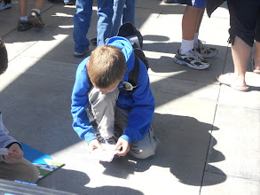 Photo: Cameron and his friend sorting insect vs non insect cards at one of the stations.