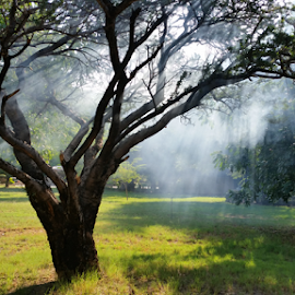 smokey tree by Peet Snyder - Instagram & Mobile Android ( samsung, natural, nature, natural light, android, smoke, tree, rays, sun )