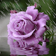 Rainy Purple Flower LWP for PC-Windows 7,8,10 and Mac