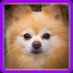 Знаешь ли ты породы собак? Icon