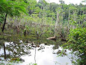 Photo: Onderweg naar Paramaribo