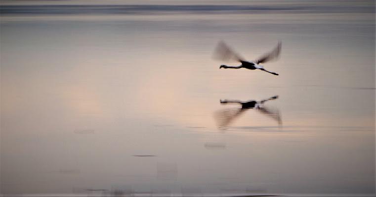 il mosso ...del volo di Carla Roganti