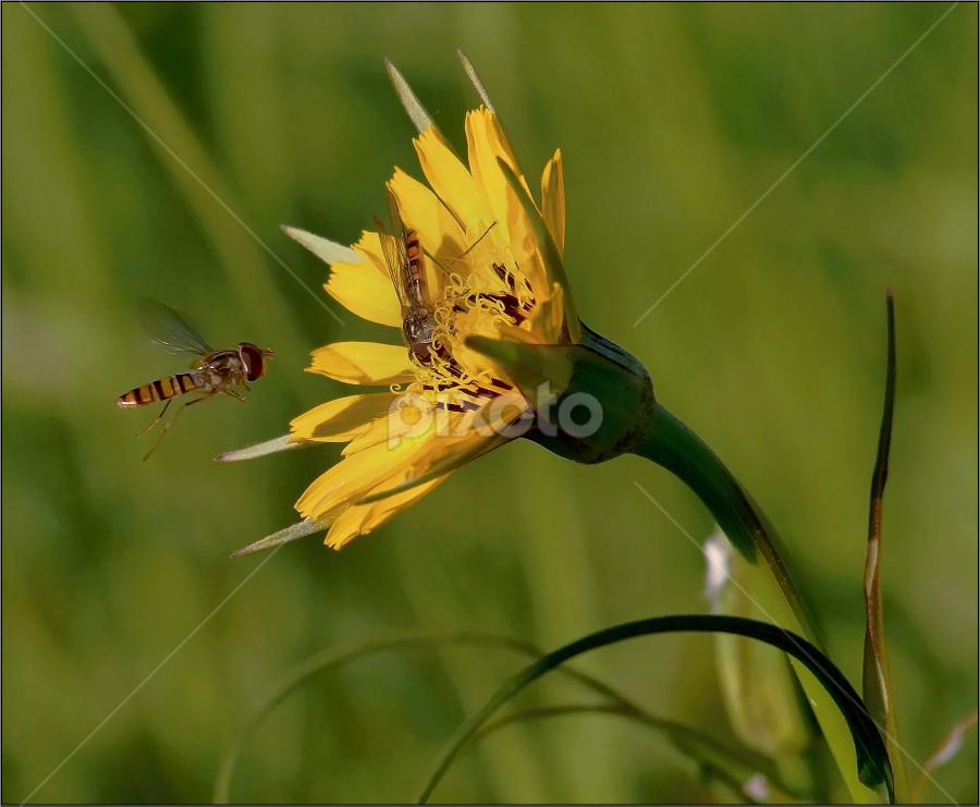 ...landing... by Ivan Rusek - Nature Up Close Flowers - 2011-2013