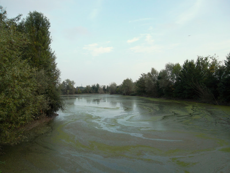 L'acqua inquinata di Furlissima