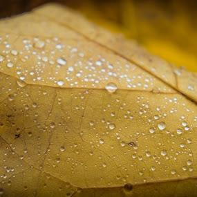 Droplets On A Leaf by Ravi Patel - Nature Up Close Leaves & Grasses ( droplet, leaf )