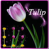 Pink Tulip Beautiful Flower