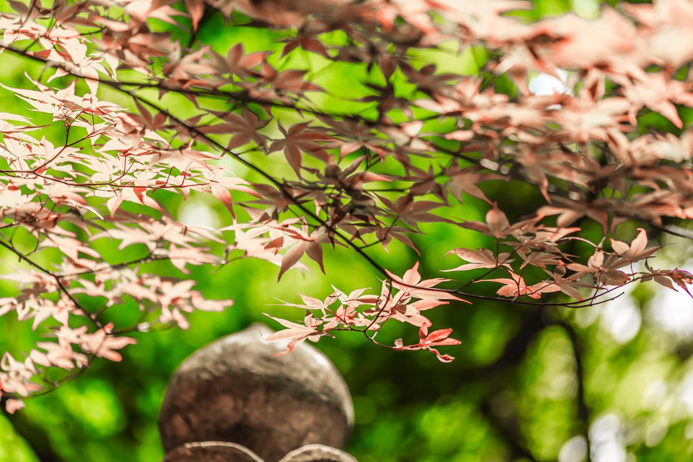金沢 尾山神社 紅葉2