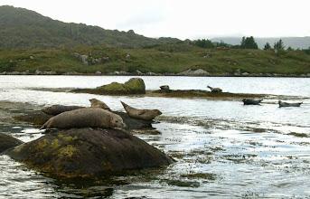 Photo: Seal Harbour, Glengarriff