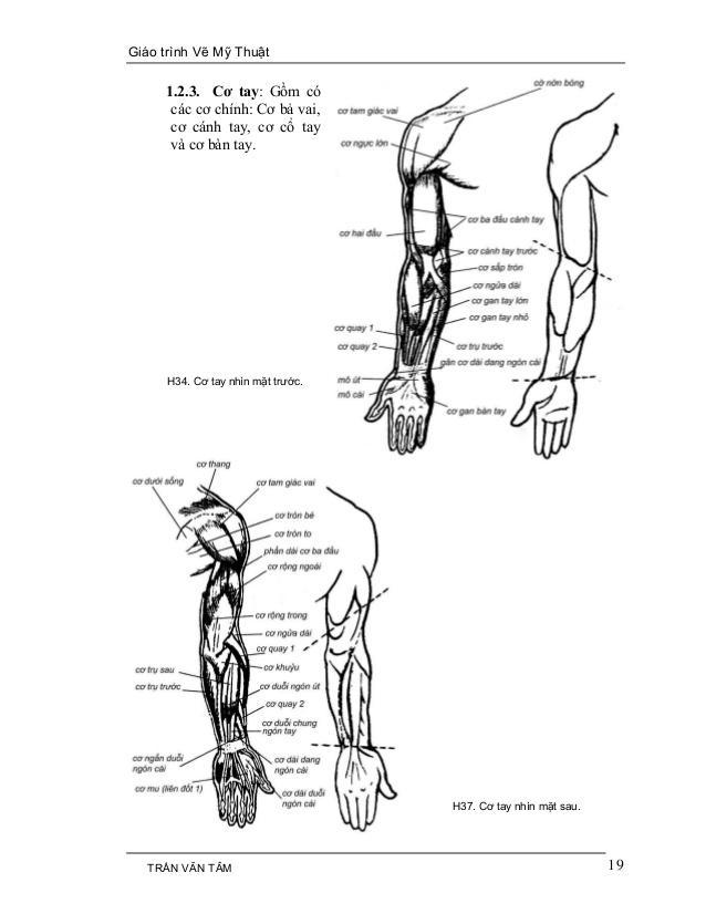 C:UsersG40-70Desktopmythuatarc.commythuatarcgiả phau cơcấu trúc cơ thểmy-thuat-1-19-638.jpg