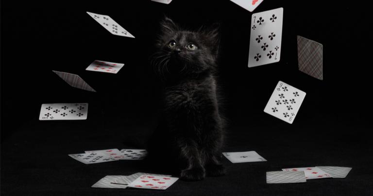 Cartas de casino vuelan alrededor de un gatito negro