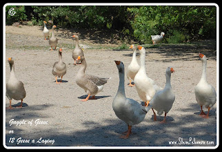 """Photo: A to Z  2011-10-04 Week 7 - Day 45  Tuesday's """"G""""  Geese"""