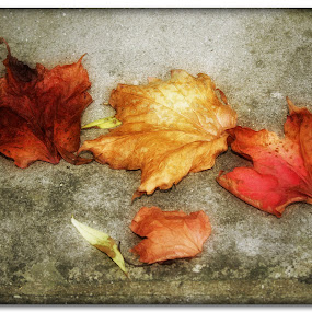 When The Bough Breaks by Nigel Finn - Nature Up Close Leaves & Grasses ( fall leaves on ground, fall leaves, red, autumn, fallen, fall, brown, gold, leaves )