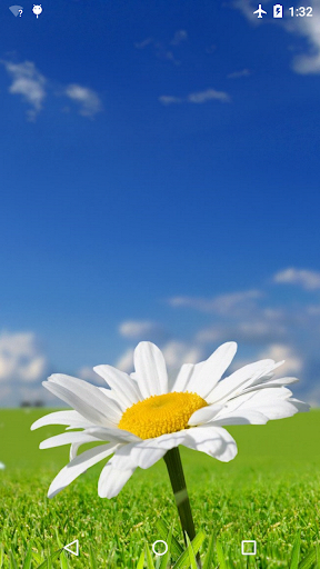 Daisy Live Wallpaper 4K