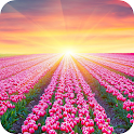 Tulip Wallpaper – HD Backgrounds icon