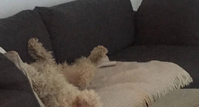 Ruu ansiokkaasti havainnollistaa sohvan mukavuutta.