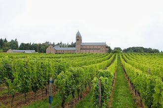 Photo: Udsigt gennem vinmarken til Abtei St. Hildegard