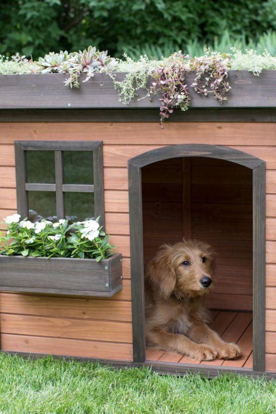 buda pre psa, zelena buda pre psa, zelena zahrada
