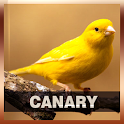 Canary Bird Song icon