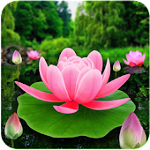 Flower Live Wallpaper 3D