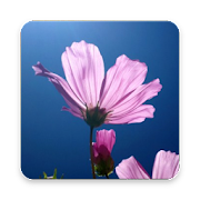 Beautiful Flower Wallpaper by MediterSoft icon