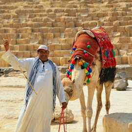 Egyptian Camel Guide by Jacqueline Newman - People Portraits of Men ( camel driver, egypt, camel, giza, pyramids )