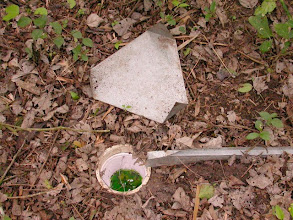 Photo: Pitfall Trap with rain guard removed. Note cup inserted into vertical PVC pipe.