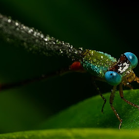 Dragonfly by SHAMSOL BAHREN ABAS - Animals Insects & Spiders